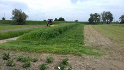 Pierwszy pokos traw