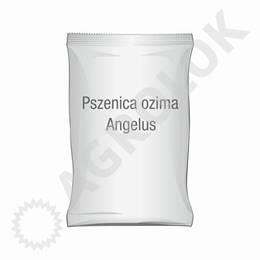 Pszenica ozima Angelus C1 50kg