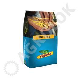 Kukurydza DKC 3788 (50tys.) 250 FAO